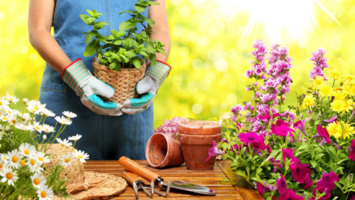 Introduction To Gardening For New Residents