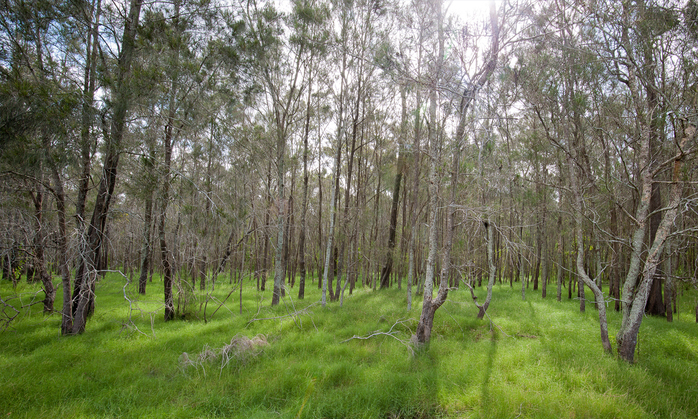 Nature walk in Boondall Wetlands
